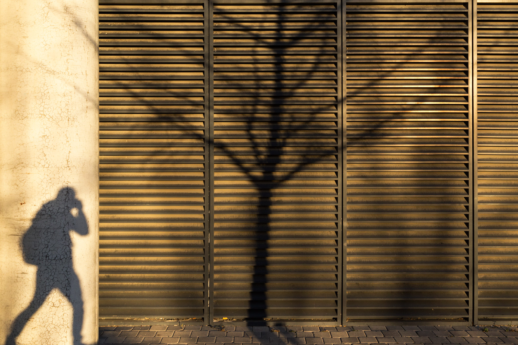 20151120. A shadow of me takes a picture of the shadow of a tree